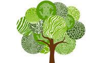 Roberto Cavalli lancia un'iniziativa green con Treedom