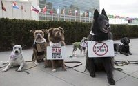 The Body Shop und Cruelty Free International veranstalten Hunde-Protest vor UN-Hauptsitz in New York