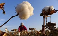U.S. to ban imports of all cotton products from China's Xinjiang region