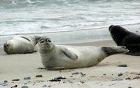 Neue Robbenverordnung: Chaos an den Grenzübergängen