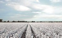 Cotton USA se refuerza en el mercado peruano