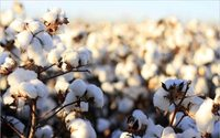 Global cotton consumption to reach record in 2018-19, says USDA