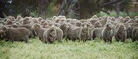 La lana protagonista della prima sfilata in Via Monte Napoleone per'On stage'
