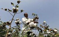 Cash Investigation remonte la filière du coton