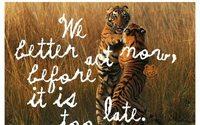 Kenzo s'engage pour la préservation des tigres sauvages