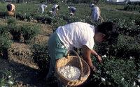 Grasse va convertir des terrains dédiés à la construction en champs de fleurs