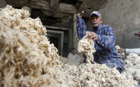 Egypt aims to double its high-quality cotton production and export