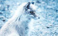 Segno dell'evoluzione del mercato delle pellicce animali, Saga Furs sprofonda in territorio negativo