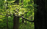 Lenzing entwickelt nachhaltige Färbetechnologie für Denim