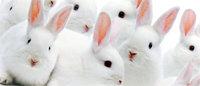 Cosmétiques : la difficile quête d'alternatives aux tests sur animaux