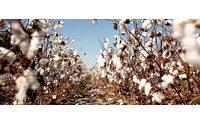 El algodón orgánico biológico representa el 38% de las ventas totales de productos de algodón de C&A Europa