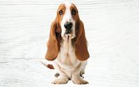 Hush Puppies es la marca de moda más valorada hoy por los chilenos