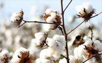 Primark launches sustainable cotton programme in Pakistan