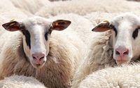 Boohoo bans wool after PETA campaign but quickly backtracks on decision