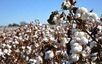 Jeanskauf ohne schlechtes Gewissen:Bio-Baumwolle boomt