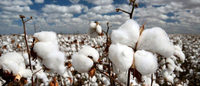 Risk of Syrian conflict cotton in your closet worries manufacturers
