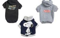 Nordstrom выпустил брендовую одежду для собак