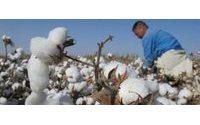 Sueca H&M é líder no uso de algodão biológico