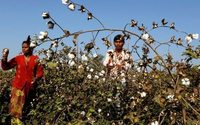 Monsanto appeals to India's top court over GM cotton patents