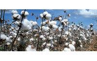 Better Cotton Initiative'e üye şirketlerin sayısı 700'ü aştı