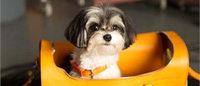 Pets protagonizam campanha de Ralph Lauren