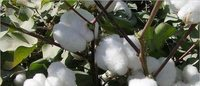 High cotton prices add to textile mills' problems