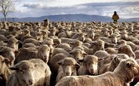 Austrália e activewear disparam preço da lã
