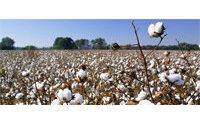 Algodón: la reserva mundial disminuirá un 2% en 2014