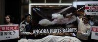Zara母公司Inditex集团不再销售安哥拉兔毛的产品