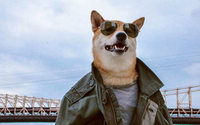 O cão modelo que arrasa na Internet