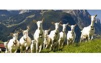 В Туве будет работать предприятие по переработке шерсти коз