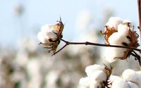 Cotton prices to increase until 2021-22