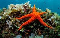 Bientôt des cosmétiques anti-âge à base de collagène d'étoiles de mer?