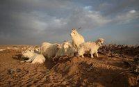 Loro Piana apre un allevamento modello nella Mongolia Interna