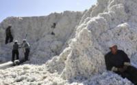 Mercado inundado de algodão