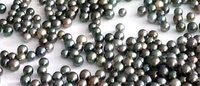 Tahiti pearls, mainstay of French Polynesian economy, endangered