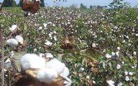 «Альпари»: Текстильным производителям можно понемногу покупать хлопок
