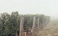 LVMH buys majority stake in Napa Valley's Colgin vineyard