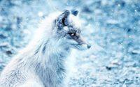 Signe de l'évolution du marché de la fourrure animale, Saga Furs plonge dans le rouge