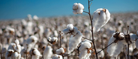 Turkey launches probe of US cotton imports