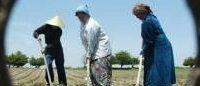 Узбекистан: между промышленностью и политикой