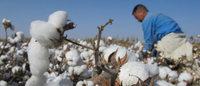 Coton biologique: un marché dopé de 30 % en 2013