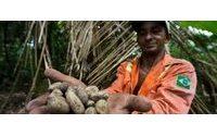 De l'Amazonie brésilienne aux instituts de beauté : la route du murumuru
