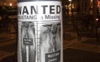 Mustang Jeans - WANTED!
