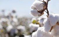 Il consumo di cotone esploderà in tutto il mondo nel 2018/2019
