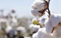 В Узбекистане создадут десять хлопково-текстильных кластеров