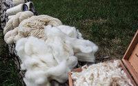 Indústria de mohair em risco de colapso