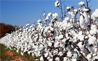 Pakistan takes steps for organic cotton certification