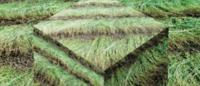 """""""LINcredibile raccolto"""": una mostra sul lino a Parigi e Firenze"""