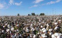 Shandong Ruyi obtient davantage de temps pour réduire sa participation dans les fermes de coton australiennes